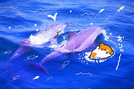 イルカさん競争