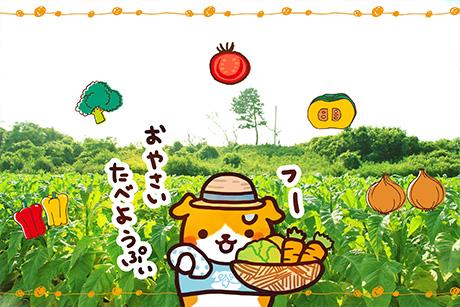 プイモ農家の夏野菜