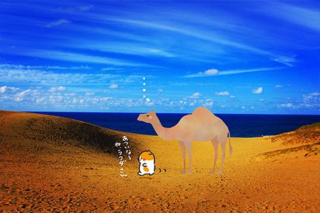 ラクダさんと旅する