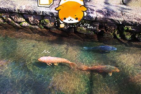 鯉さんにご飯をあげたい